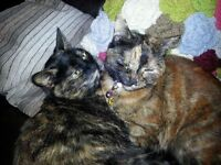 2 female neutered indoor cats rehome