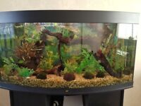 4ft bow front tank and stand