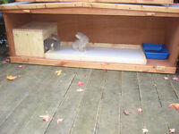 "RABBIT HUTCH ..INTERNAL ..GERM FREE 48""WIDE FROM£35.00 ALL SIZES A MUST FOR VIEWING 7 DAYS"