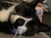 Cat - micky