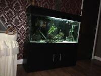 Fish tank 400lt
