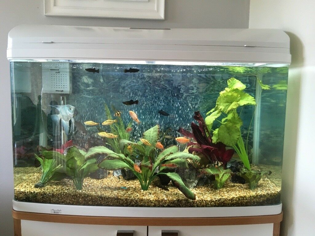 Cheap Tropical fish tank for sale