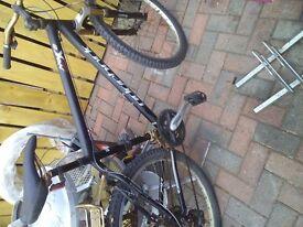 Ridgeback adults mountain bike
