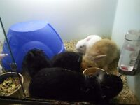 Female rabbits x 5