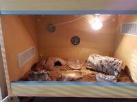 Leopard gecko and setup for sale