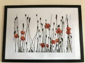 Framed poppy print