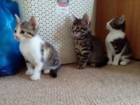 Lovely kitten for sale.