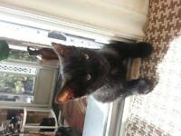 looking to rehome both these cute kittens