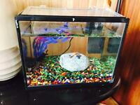 Fish and fish tank for sale! With accessories