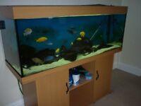 juwel rio 400 fish tank ,complete set up inc fish