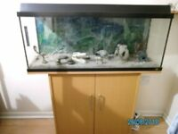 Juwel Tropical Fish Tank