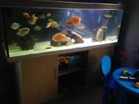 6ft tank and fish