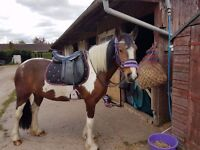 14hh mare **sold subject to collection**