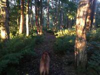 Meg's & Milo's Dog Walking