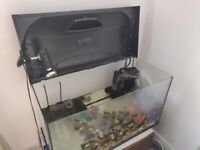Pet Turtle with 105L tank w/ lid, filter and basking platform