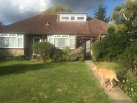 Cleaner/dog sitter wanted in South London great pay