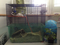 two white gerbils with all accesories very frendly for free colect from blackley 07534105608