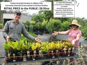 HUGE RANGE OF QUALITY PLANTS - Trade & Public Welcome! HS098 Tallai Gold Coast City Preview