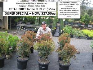 SUPER SPECIALS - YOU MUST SEE THESE! From $9.95ea  HS104 Tallai Gold Coast City Preview