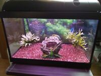 Fish tank full tropical set up