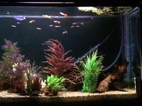 "Fishtank 60""x30""x12"" 354 litre tropical setup"