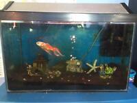 Cold water fish set up