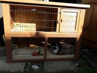 2 Guinea Pigs with 2 cages.