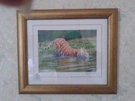 Stephen Gayford limited addition tiger print