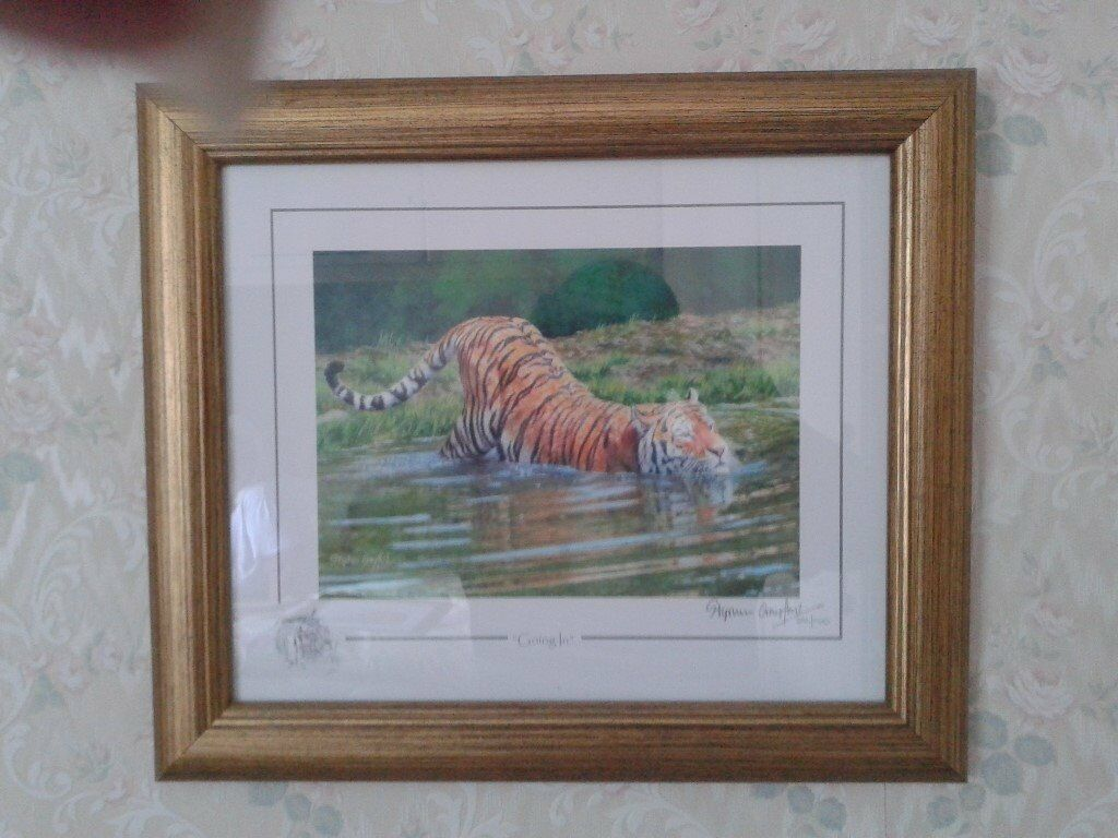 Stephen Gayford limited addition tiger print
