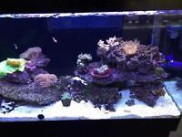 Complete marine fish tank+livestock