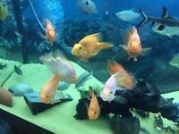 Various topical fish
