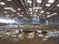 For Sale Organic Arable Farm - Milking Goats - in the Center of France