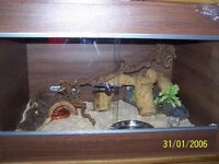 VIVARIUM AND TWO CORN SNAKES