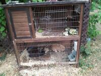 I beautiful hutch with 2 pure breed miniature lop bunnies
