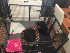 Puppy whelping pen. Dog enclosure.