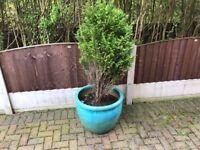3 XL Solid Plant Pots