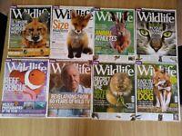 Free BBC Wildlife Magazines