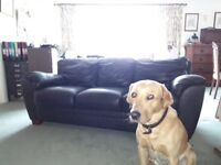 TWO BROWN LEATHER 3 SEATER SOFAS