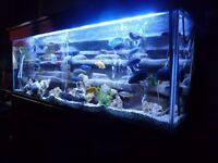 Aquarium Full Set-up.