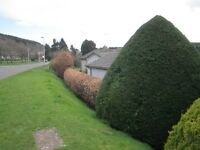 Gardener / Handyman, lawn mowing , hedgecutting, planting & weeding,tree pruning/cutting