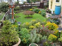 LET ME MAKE YOUR GARDEN LOOK GREAT BEFORE WINTER GETS HERE TEL...07523101861 ALL AREAS COVERED
