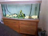 5ft AquaOne Fish Tank