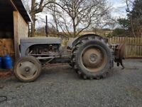 Grey fergie TE20 Petrol/parafin with loader