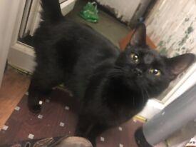 Gorgeoue Female Black cat
