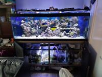 6x2x2 tank stand and sump
