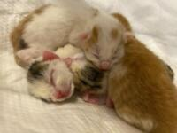 Stunning cute kittens (All Reserved)