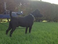 Patterdale terrier lakeland border Russell fell bull wheaten