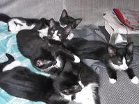 kittens for sale 2 good homes