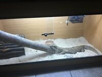 Bosc monitor with full set up.