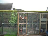 4M x2M Roofed Chicken Enclosure Plus Coop And All Equipment Needed For Caring For Many Chickens
